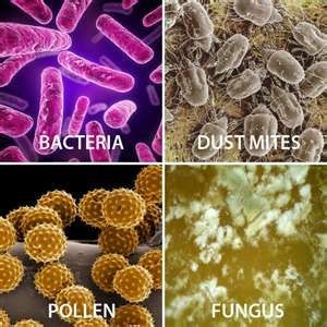 microscopic things in the air (bacteria, mold, dust mites, fungus)